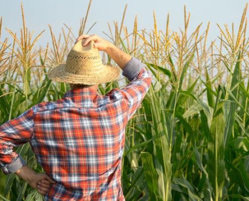 praca w gospodarstwie rolnym